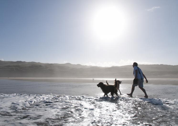 A man throwing a ball in the sea with two dogs at Perranporth beach