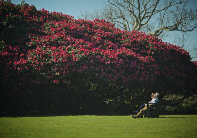 A couple sat on a bench at the Lost Gardens of Heligan