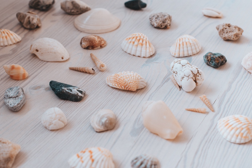 An assortment of seashells