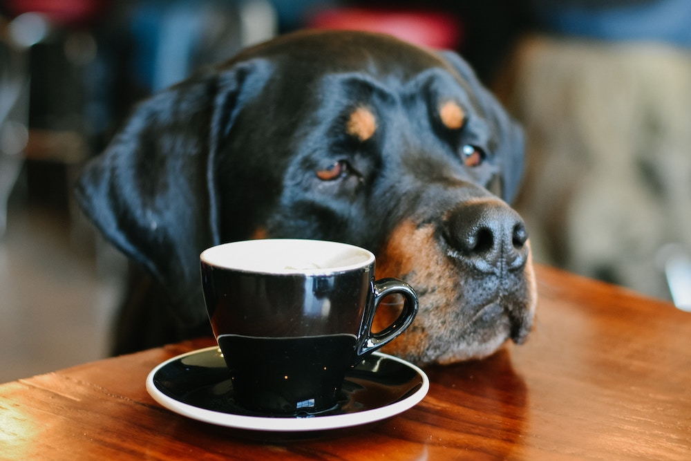 A dog at a café resting its head on the table