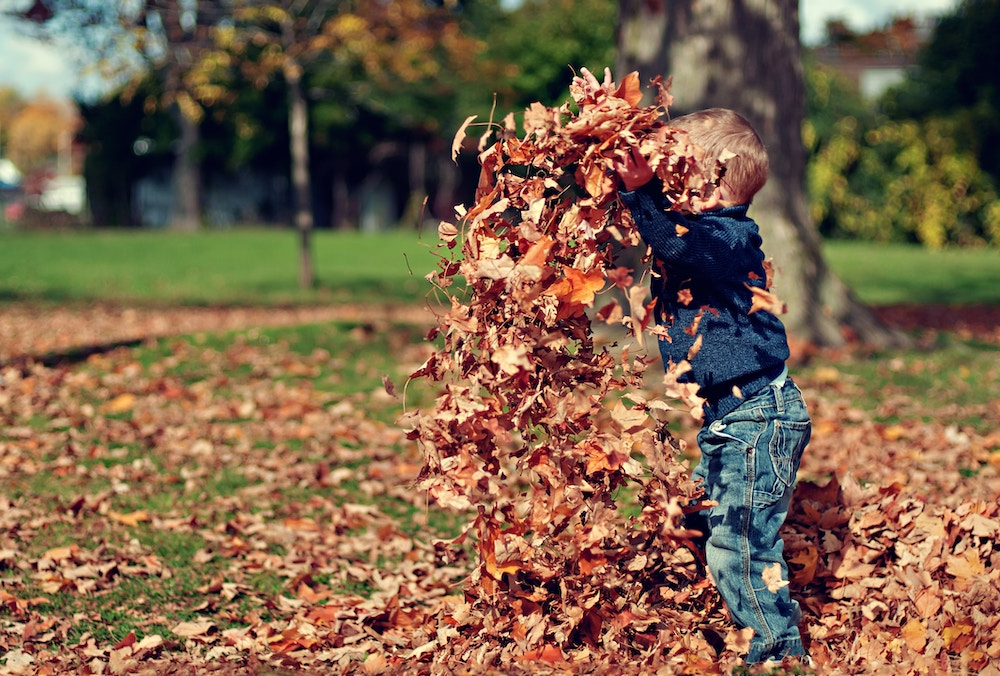 A young boy playing in a pile of autumnal leaves