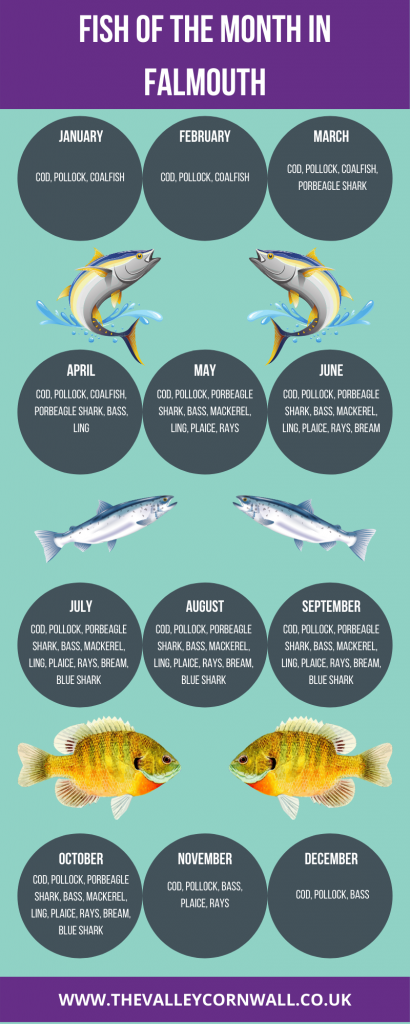 Infographic showing the fish of the month in Falmouth