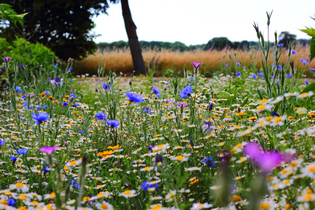 A meadow with various flowers