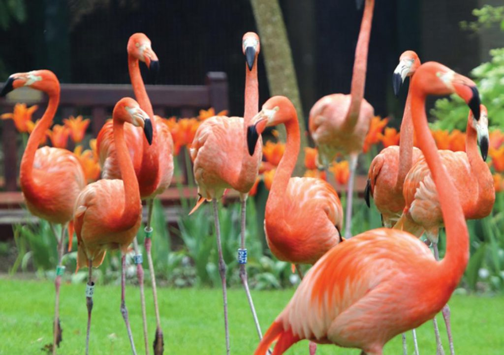 Flamingoes in Paradise Park